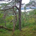 Sällsynta lavar får skydd i Korsviken