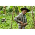 Vi søger en koordinator til Verdens Skoves Internationale Afdeling