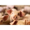 Djurens Rätt vill att förslag till nya djurskyddsregler dras tillbaka – saknar vetenskapligt stöd och leder till allvarliga försämringar för djuren