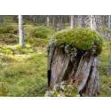 Vi har 19 nya naturreservat i Värmland