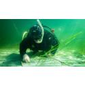 Ålgräsängar återplanteras i Kosterhavets nationalpark