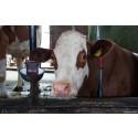 Pressemitteilung | Welttierschutzgesellschaft fordert Haltungsverordnung für Milchkühe im Koalitionsvertrag