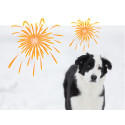 Begränsa fyrverkerierna - för fler lyckliga djur!