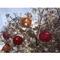 På lördag intar Japan Botaniska trädgården