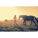 Lär dig hästars språk