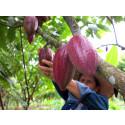 Elizabeth Agudelo – Forskande och passionerad kakaobonde från Colombia