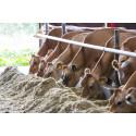 Arla incentivises more GM free feed