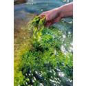 "Havsbönder om framtiden: ""Odling av alger kan bli miljardindustri"""