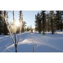 Distriktsveterinärerna förändrar verksamheten i norra Lappland