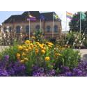 Sjöbo kommun flaggar för allas lika värde