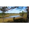Dalarna har fått fyra nya naturreservat!