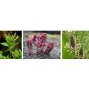 Vilken Växt? 5:e-klassare tävlar om bäst på växter