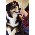 Bräcke diakoni sponsrar Specialvarvet – finns på plats med terapihundar
