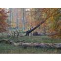 Skovene er en klimaløsning - men det er biomasse fra skoven ikke
