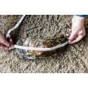 Världens största ostron hittat utanför danska kusten