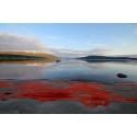 Støtte til effektiv og bærekraftig høsting av raudåte – havets rubin