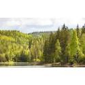 Statskog har til nå solgt 162 skogeiendommer på til sammen 316 000 dekar. Nå er det klart for en ny salgsrunde.