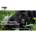 Möt bergsgorillor i Uganda