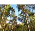 Vad styr skogsägarnas beslut i klimatförändringsfrågor?