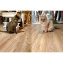 Why is High End Resilient Flooring (HERF) Friendly to Pets?