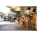 Tel Aviv är världens hundvänligaste stad: Har flest hundar per capita