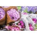 Allt från frön och sticklingar till blommor och krukväxter hittar du på marknaden