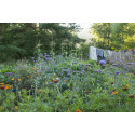 Mina trädgårdar - föreläsning på Sjöbo bibliotek