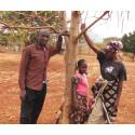 Julklappstips från Barnfonden: Mirakelträdet Moringa