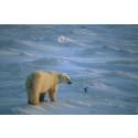 Obamas julklapp till Arktis möts av jubel