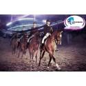 Hästbajs från EM i ridsport blir energi