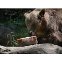 Blodglass och frysta vattenmeloner ger svalka till djuren i Skånes Djurpark