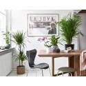 Topp 7 luftrenande växter