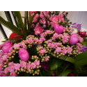 Ildtopp - en blomst med spreke farger, perfekt for alle som mangler grønne fingre!