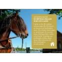 Hästar gör skillnad på Landsbygdsriksdagen