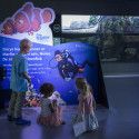 Display_Find_Dory