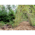 Myternas Skog skapar nyfikenhet för utelek