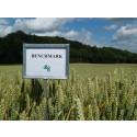 Benchmark hvede