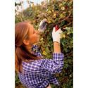 Undgå ekstra-arbejde i haven til foråret med en lille indsats nu