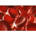 Bayer får nytt Hemofili A-läkemedel godkänt