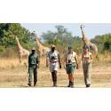 Safari till fots