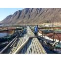 Tredoblet fiskeproduksjonen med oksygeneringsløsning fra AGA