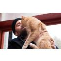 Adoptera en hemlös katt