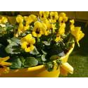 Blomstene som tåler kulde
