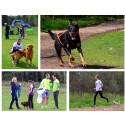 Femte året för hundvänliga motionsloppet Hundlöpet