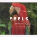 "Calvin Harris släpper singeln ""Feels"" feat. Pharrell Williams, Katy Perry & Big Sean idag"