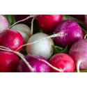 Årets frönyheter – mer svängrum för ätbart och ekologiskt