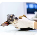 Dyrare veterinärvård – se till att din hund är rätt försäkrad!