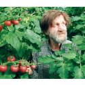 Sveriges första kretsloppsodling för tomater och fisk byggs i Västernorrland