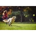 Friskies Doggy Run – uudenlainen juoksutapahtuma koiraharrastajille