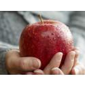 Pressinbjudan: Lärardagen 26 oktober för förskolans och fritidshemmens personal
